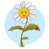 цветок маргаритки иллюстрация вектора