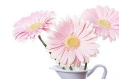Цветок маргаритки Gerbera розовый Стоковое фото RF