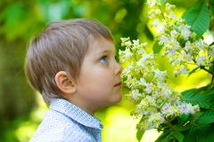 Цветок мальчика пахнуть Стоковые Изображения RF