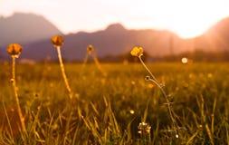 цветок меньший заход солнца стоковое изображение rf