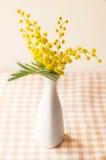 Цветок мимозы в вазе Стоковое фото RF