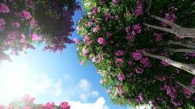 Цветок Миртл Crape ферзя (Speciosa Lagerstroemia бесплатная иллюстрация