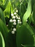 цветок может стоковые фотографии rf