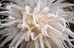 Цветок моря Стоковая Фотография RF