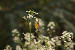 Цветок мустарда вы должны полюбить оно Стоковое Фото