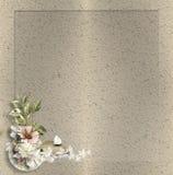 цветок мягкий Стоковые Изображения RF