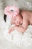 Цветок младенца Стоковое Изображение