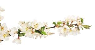 Цветок на белизне Стоковые Фото