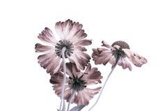 Цветок 3 на белой предпосылке машинный обрабатывать столба стоковые фото