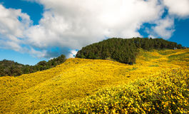 Цветок на горе Стоковое Изображение