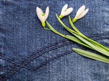 Цветок на голубой ткани Стоковое Изображение