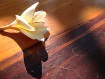 Цветок на деревянной предпосылке Стоковое Изображение RF