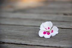 Цветок на деревянном столе Стоковая Фотография