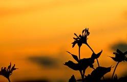 Цветок на заходе солнца стоковое изображение rf