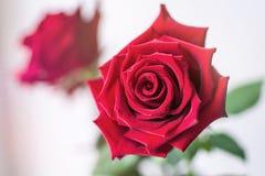 Цветок на заднем плане Стоковое Изображение RF