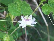 Цветок на зеленой предпосылке лист Стоковая Фотография RF