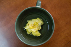 Цветок на дне чашки Стоковое фото RF