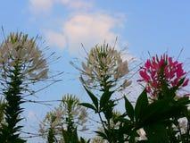 Цветок на парке Benchakitti Стоковое Изображение RF