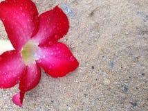 Цветок на предпосылке песка Стоковое Изображение RF