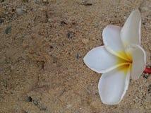 Цветок на предпосылке песка Стоковое Изображение