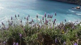 Цветок на пляже стоковое изображение
