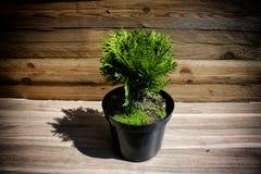 цветок на древесине Стоковая Фотография RF