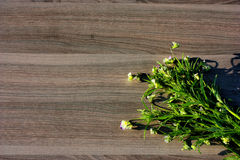 цветок на древесине Стоковое Изображение