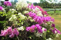 Цветок на древнем городе Стоковое Изображение RF