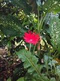Цветок на саде стоковые фото