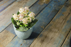 Цветок на старой таблице Стоковая Фотография