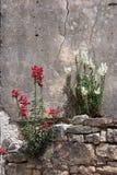 Цветок на стене стоковое фото