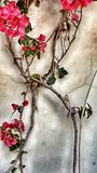 Цветок на стене Стоковая Фотография