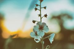 Цветок на сумраке Стоковые Фото