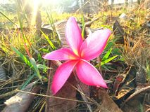 Цветок на траве Стоковое Изображение