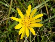 Цветок на луге Стоковые Изображения RF