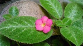 Цветок на утесе Стоковое Изображение RF
