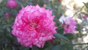 Цветок на ферме стоковая фотография