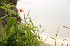 Цветок на холме Стоковое фото RF