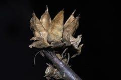 Цветок на черной предпосылке Стоковое Изображение