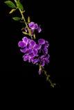 Цветок на черной предпосылке Стоковые Фото