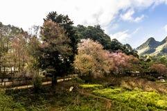 Цветок на Чиангмае Стоковое Фото