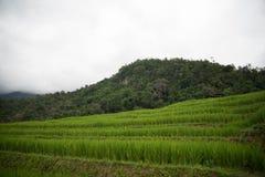 Цветок на Чиангмае Стоковые Изображения RF