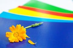 Цветок на яркой коробке Стоковые Фото