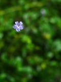 Цветок неба Стоковое Изображение RF