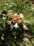 цветок немногая белое Стоковое Изображение