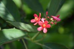 цветок немногая красное Стоковые Фотографии RF