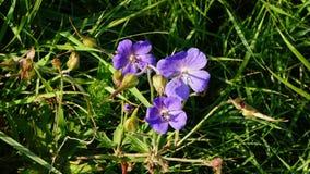 цветок немногая пинк Стоковые Изображения RF