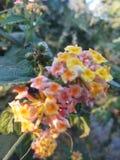 цветок немногая стоковые фотографии rf