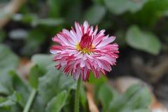 цветок немногая Стоковое Изображение RF