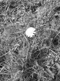 цветок немногая Стоковые Изображения